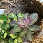Summer Basket Greenery